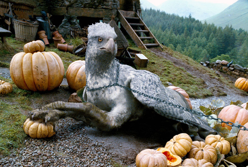 BlogHogwarts - Buckbeak