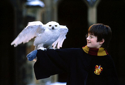 Harry Potter y Hedwig